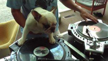 DJ Dog Plays Along With Handler