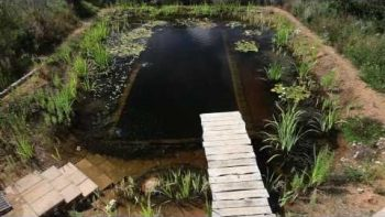 Man Builds Natural Swimming Pool Pond