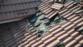 Bat Infestation Discovered Under Roof Tiles
