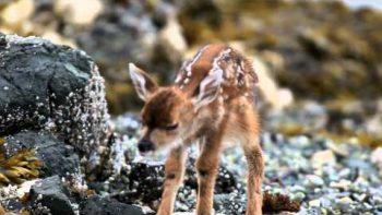 New Born Baby Deer