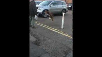Acrobatic Dog Balances On Chain