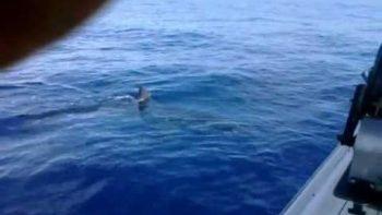 Fishermen Encounter Great White Shark