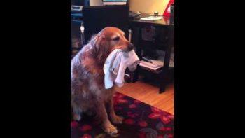 Dog Catches Six Socks