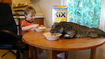 Little Boy And Huge Iguana Eat Kix Cereal Together