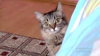 Cat Planning Something Evil