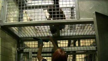 Zoo Gives Orangutans iPads