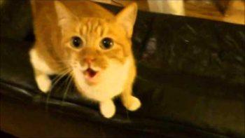 Kitty Dubstep