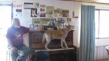 Dog Howls While Playing Piano