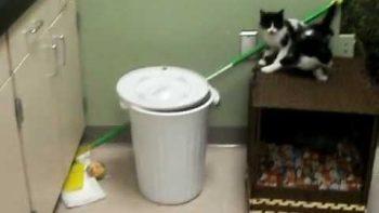 Kitten Falls In Trashcan