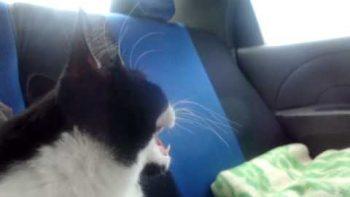 Cat Freaks Out In Car Ride