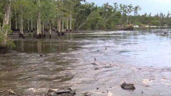 Louisiana Sink Hole In Assumption Parish Swallows Trees