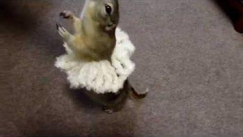 Ballerina Chipmunck