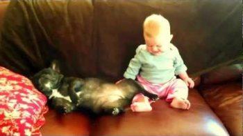 Baby Laughs At Snoring Bulldog