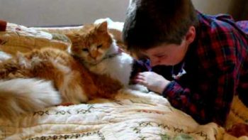 Boy's Emotional Reunion With His Lost Cat
