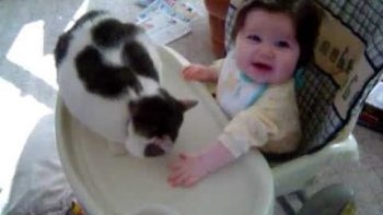 Cat Punches Baby