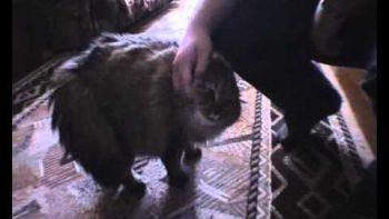 Cat Says No No No