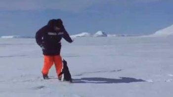 Penguin Attacks Man