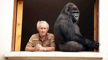 French Couple Adopts Gorilla
