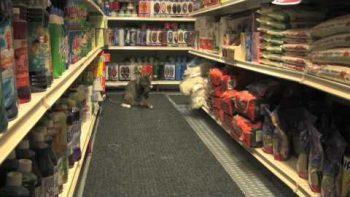Mockumentary About Bodega Cats