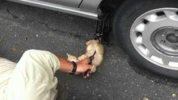 Kitten Helps Change A Tire
