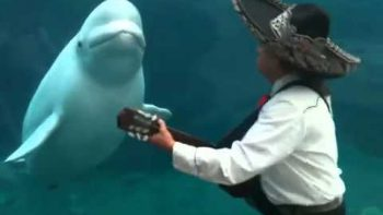 Mariachi Band Plays For Whale