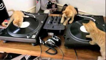 DJ Kittens