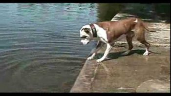 Dog Keeps Fetching Rock That Rolls Back Into Water