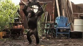 Monkey Shoots AK-47 Machine Gun FAKE