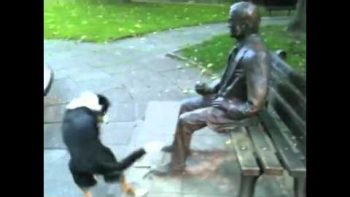 Dog Begs Statue To Throw Stick To Play Fetch