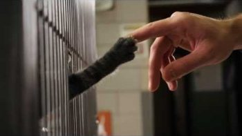 Cats Ask For Home in Cute Humane Society Commercial