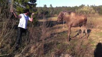 Man Scares Off Attacking Moose.