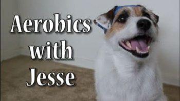 Dog Does Aerobics