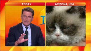 Grumpy Cat On Australian Today Show