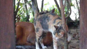 Antelope Licking Cat