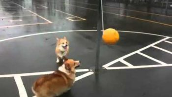 Two Dogs Play Tether Ball