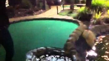 Greatest Mini Golf Put Put Shot, Ball Floating On Water Stream Shot