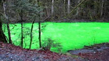 Goldstream River Turns Green