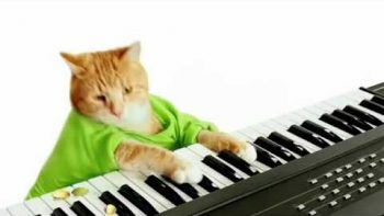 Keyboard Cat Pistachio Commercial