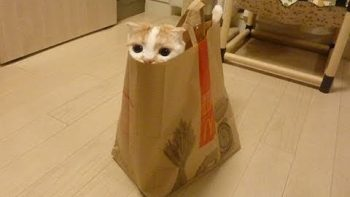 Cute Cat In McDonald's Bag