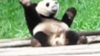 Panda Dancing To Soulja Boy Pretty Boy Swag