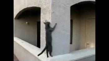 Cat Parkour PK
