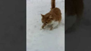 Dog Shoves Cat's Face In Snow