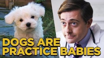 Are Dogs Practice Babies?
