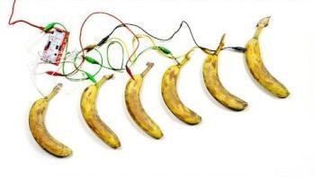 Making Music On Bananas
