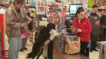 Clever Dog Shops For His Own Treats