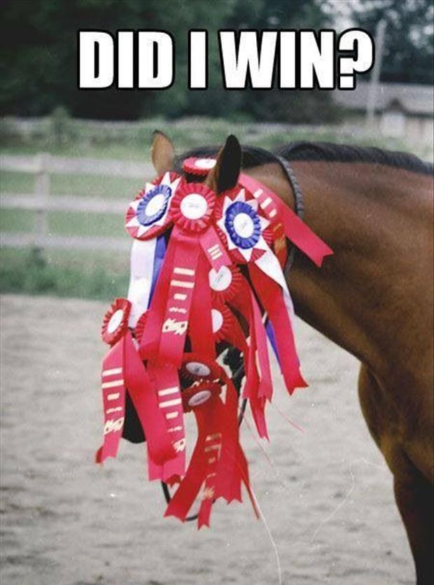 Did I win? – Horse