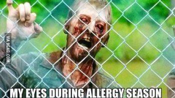 Me eyes during allergy season