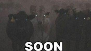 Soon: Cows