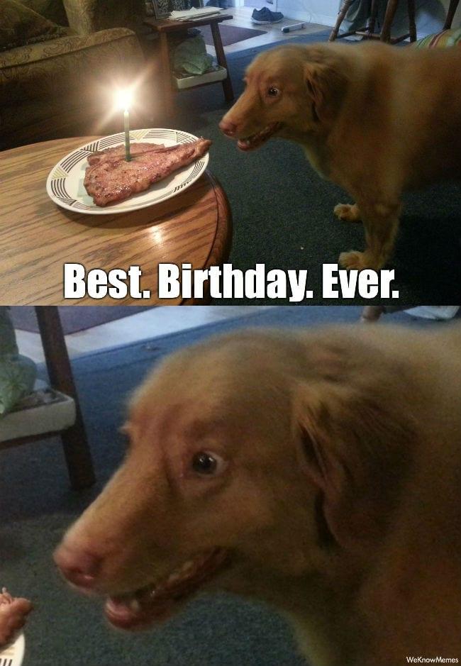 Best birthday ever – Dog