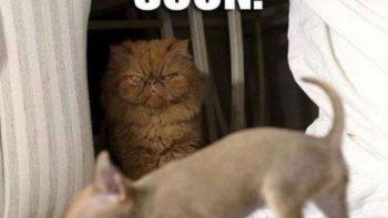 Soon: Cat